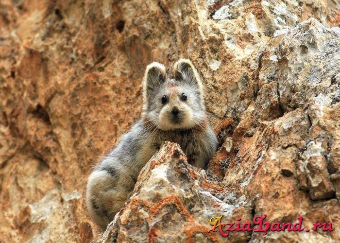 волшебный кролик фото
