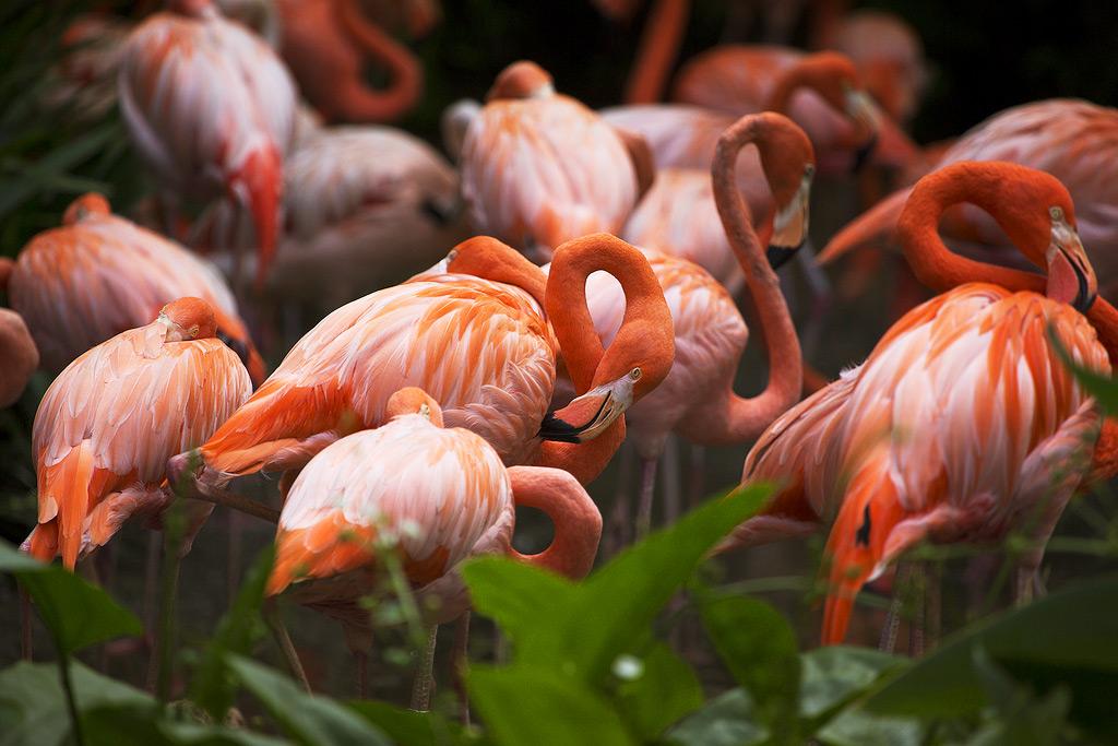 Птичий парк в Джуронге, Сингапур