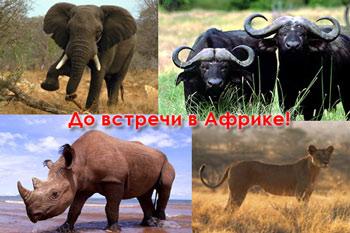 До встречи в Африке: слон, буйвол, лев, носорог