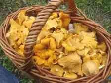 учимся собирать грибы