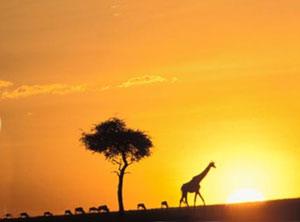 Экстремальное сафари в Африке