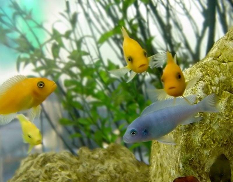Как правильно содержать морской аквариум