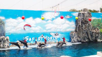 Развлечения на Джомтьене - Dolphin World Pattaya