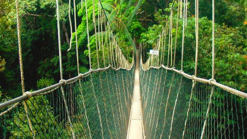 Веревочный мост в национальном парке Таман-Негара