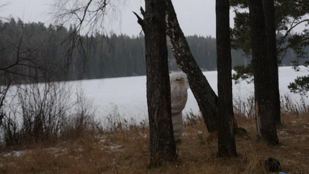 В Челябинской области открыли кормушку для снежного человека