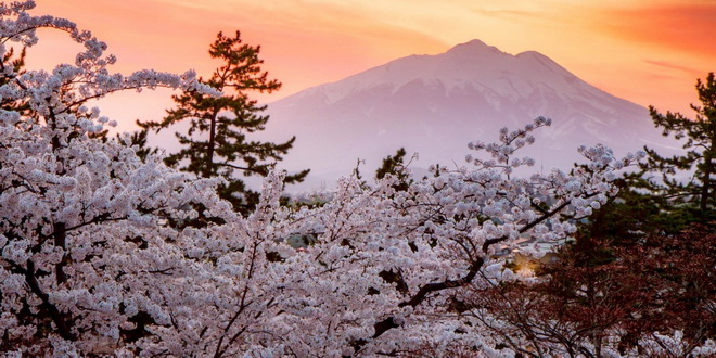 На сакуру – пораньше