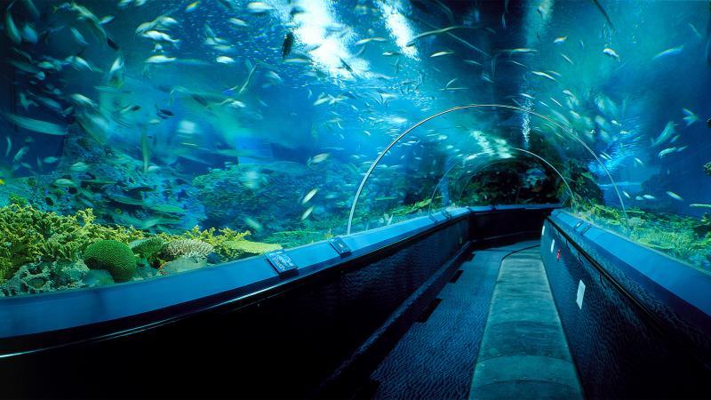 тоннели шанхайского океанариума