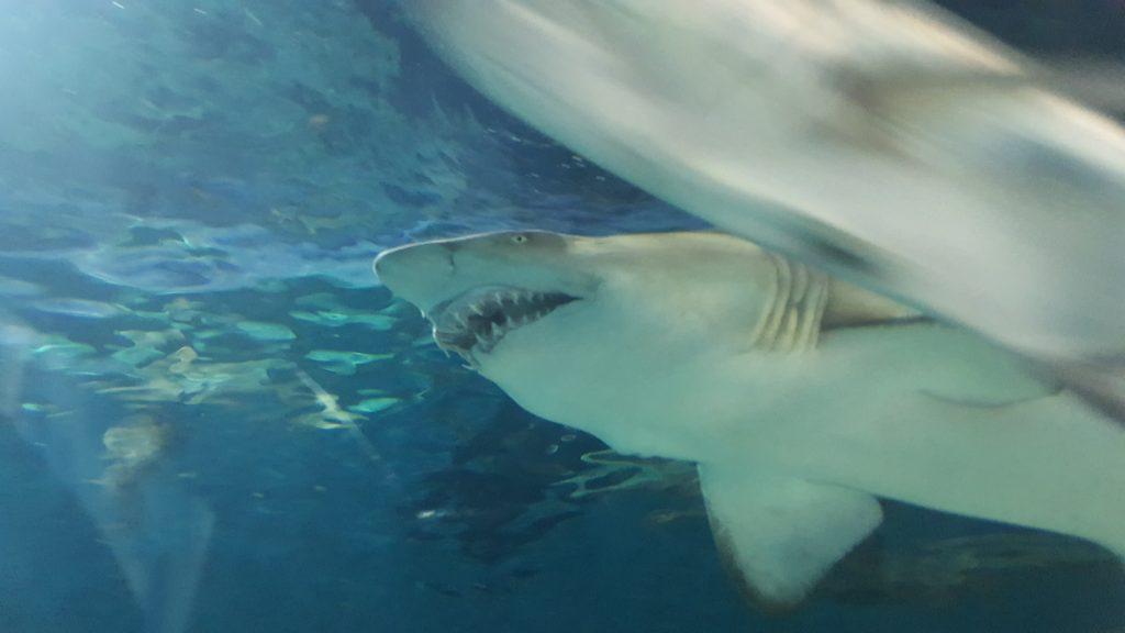 акулы в шанхайском океанариуме